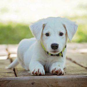 omgangsregeling hond
